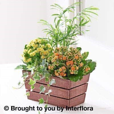Autumn Kalanchoe and Palm Planter: Booker Flowers and Gifts