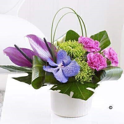 Carnation Vanda Orchid and Anthurium Arrangement: Booker Flowers and Gifts