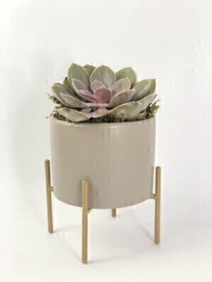 Chic Pink Echevaria in Pot: Booker Flowers and Gifts