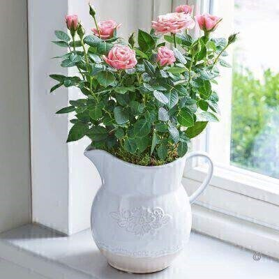 Country Style Rose Jug - Pink: Booker Flowers and Gifts