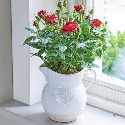 Country Style Rose Jug - Red: Booker Flowers and Gifts
