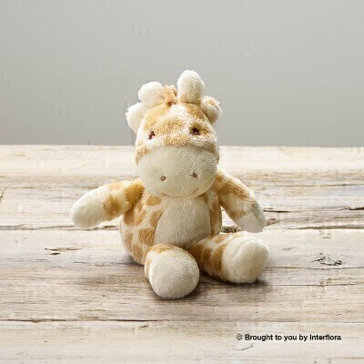 Gigi Giraffe Soft Toy: Booker Flowers and Gifts