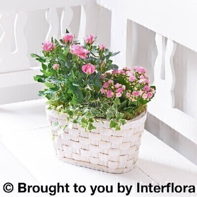 Happy Birthday Pink Rose and Kalanchoe Basket: Booker Flowers and Gifts