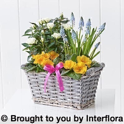 Happy Birthday Spring Cheer Planted Basket: Booker Flowers and Gifts