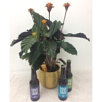 House Plant and Liverpool Craft Beer: Booker Flowers and Gifts