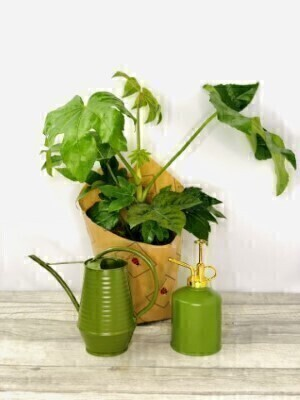 Indoor House Plant Gift Set: Booker Flowers and Gifts