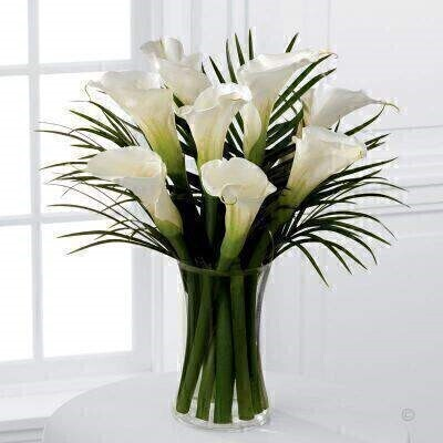 Simple and sophisticated these exquisite full-sized white calla lilies are accented by lush palm leaves and arranged in a sleek clear glass vase to create a wonderful heartfelt gesture. This products contains 8 Stems