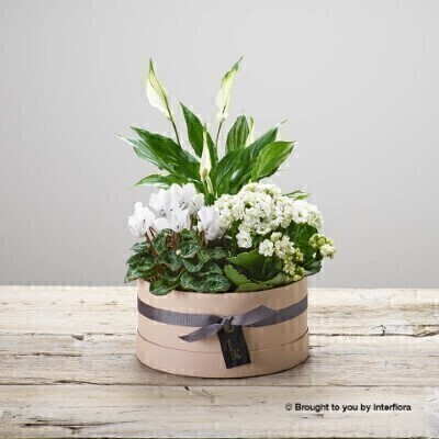 Let It Snow Hatbox: Booker Flowers and Gifts