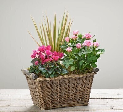 Magenta Breeze Planted Basket: Booker Flowers and Gifts