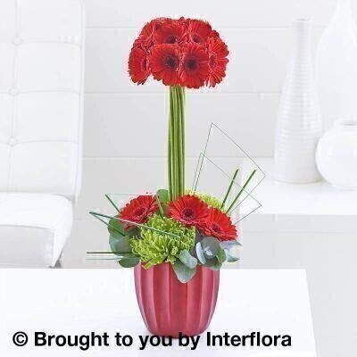 Red Flowers  Modern Flowers<br><br>Liverpool Flower Delivery<br><br>We offer advanced booking flower delivery same day flower delivery 3 hour Flower delivery guaranteed AM PM or Evening Flower Delivery and we are now offering Sunday Flower Delivery. .<br><br><ul><li>Hand arranged by our florists</li><li> To give the best occasionally we may make substitutes</li><li> Our flowers backed by our 7 days freshness guarantee</li><li> Approximate dimensions 50x24cm</li><li> This product is available for delivery throughout the UK</li></ul><br><br>THIS ARRANGMENT IS IN FLORAL FOAM AND COMES PRE ARRANGED IN CONTAINER Bright germini blooms are arranged with precision to form a dramatic centrepiece that will make admirers look twice.<br><br>Featuring 12 red germini and 2 green chrysanthemum blooms with eucalyptus and steel grass presented in a metallic red grooved ceramic pot.<br><br>The best florist in Liverpool<b><b>Come to Booker Flowers and Gifts Liverpool for your Beautiful Flowers and Plants if you really want to spoil we also have a great range of Wines Champagne Balloons Vases and Chocolates that can be delivered with your flowers. To see the full range see our extras section. You can trust Booker Flowers and Gifts can deliver the very best for you