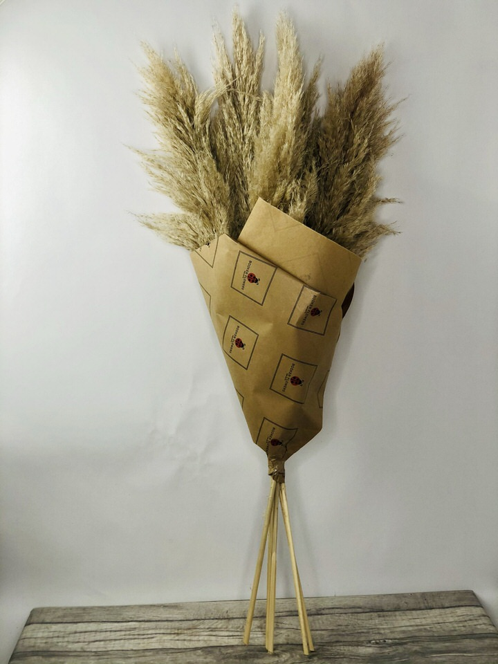 Natural Dried Fluffy Pampas Grass: Booker Flowers and Gifts