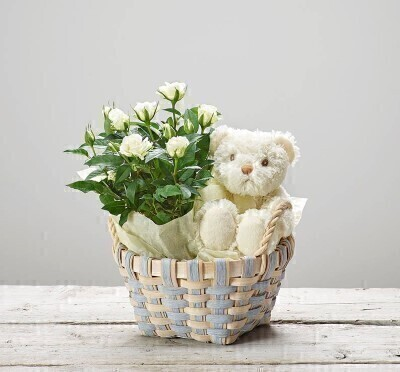 White Roses and Teddy Bear - New Baby Gift