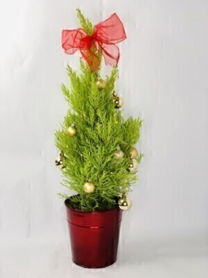 O Christmas Tree: Booker Flowers and Gifts