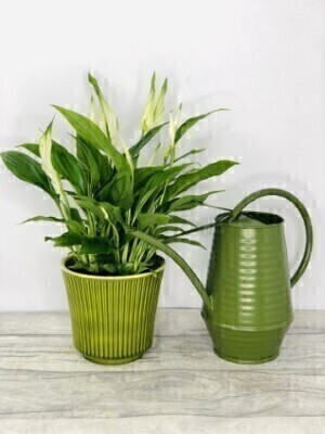 Peace Lily with Indoor Watering Can: Booker Flowers and Gifts