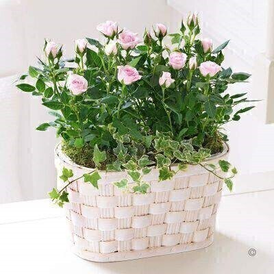 Pink Rose Basket: Booker Flowers and Gifts