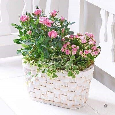 Rose and Kalanchoe Basket: Booker Flowers and Gifts