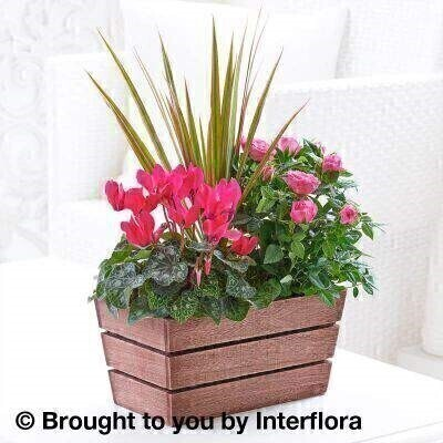 Rosy Pink Autumn Planter: Booker Flowers and Gifts