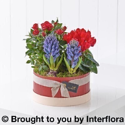 Scented Christmas Hatbox Planter: Booker Flowers and Gifts