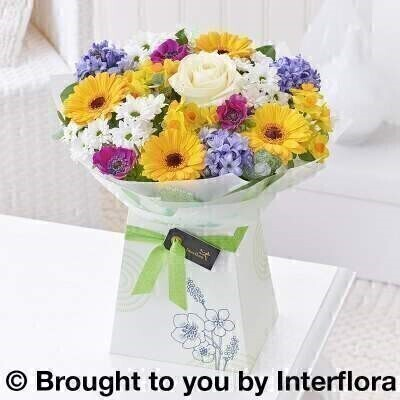 Joyful Spring Gift Box Plus Size