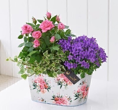Summer Planted Tin: Booker Flowers and Gifts