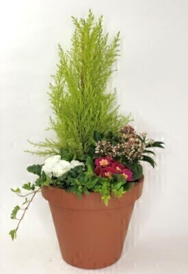 Terracotta Pot with Outdoor Plants: Booker Flowers and Gifts