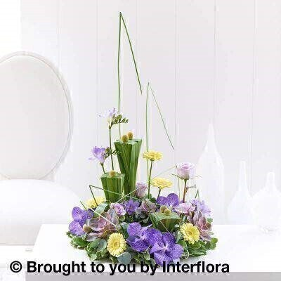 Vanda Orchid and Echeveria Arrangement: Booker Flowers and Gifts