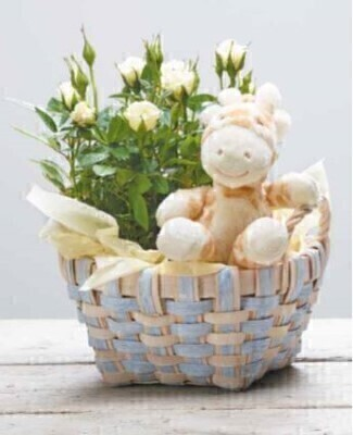 White Rose Baby Basket: Booker Flowers and Gifts