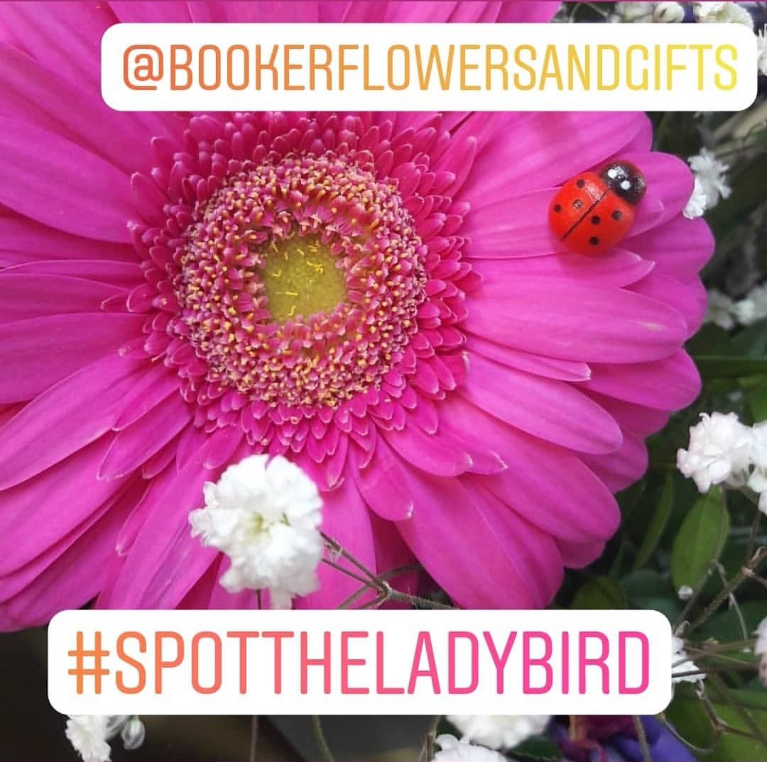 Spot the Ladybird Competition. WIN a free bouquet from Booker Flowers and Gifts