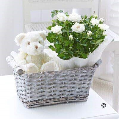<h1>Cream Roseandnbsp;- Plant inandnbsp;Gift Basket</h1>
