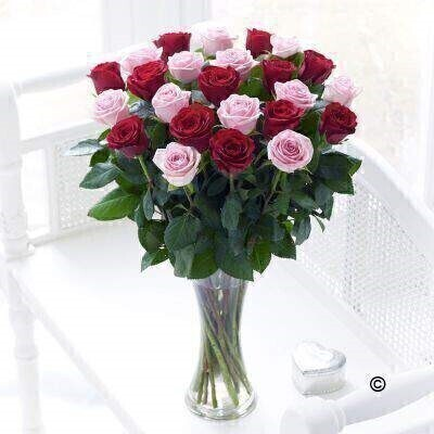<h1>Pink and Red Roses - Flower in Vase</h1>