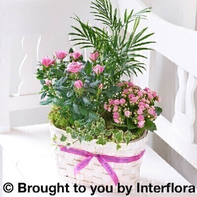 <h1>Pink Plants -andnbsp;Planted Arrangement</h1>