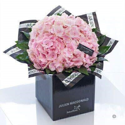 The hydrangea is back in vogue — and when you see this picture-perfect canopy of petals in pastel pink it's easy to see why. Here we've chosen the finest quality blooms and presented them in sumptuous designer packaging. It's a chic and understated gift that just exudes natural beauty.<br><br>Featuring 3 glittered pink hydrangea with aralia presented in Julien Macdonald foil wrap and a dual-branded gift box with designer gift tag and ribbon. This hand-tied is tightly constructed to create a neat compact posy of flowers. <br><br>This product contains 3 stems. <br><br>Approximate Product Dimensions: Height: 35cm Width: 30cm