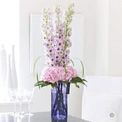Vase IncludedStylish elegant and wonderfully feminine these magnificent delphiniums and delicate hydrangea are a true celebration of natural beauty. Notice how these soft shades of palest lilac and pink seem to shimmer in the light? An exquisite gift choice for someone very special.Featuring lilac/pink Dewy Lady delphinium and Verena pink hydrangea with aralia leaves and lily grass expertly arranged in a purple crackled glass vase and finished with luxury gold and black wrapping for maximum impact when your gift is delivered.This product contains 8 stems.Approximate Product Dimensions: Height: 90cm Width: 28cm