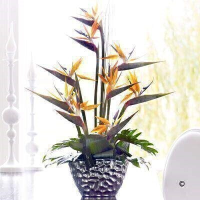 This expertly arranged display of sensational strelitzia is a celebration creativity and colour. With an exotic feel and a contemporary look - this striking arrangement is perfect for making a big impression. Featuring orange strelitzia with green aralea leaves - aspidistra leaves - philodendron and steel grass - all expertly arranged in an elegant silver ceramic planter and presented in luxurious packaging for maximum impact when your gift is delivered.
