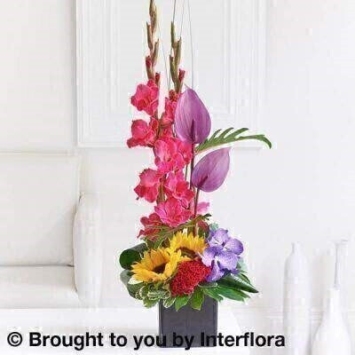 Made in Floral Foam and comes in the pictured container<br><br> This designer arrangement captures the colour and freshness of the season in exquisite style. A rich colour palette and a bold choice of shapes and textures are all beautifully arranged to create a vibrant and eye-catching centrepiece. Simply stunning.<br><br> Featuring 2 purple anthurium  a cerise celosia  2 cerise gladioli  2 yellow sunflowers and 2 blue Vanda orchids with aralia and aspidistra leaves  green philodendron  pittosporum and steel grass  presented in a black cube vase.<br><br> Height: 70cm  Width: 25cm